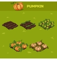 SET 5 Isometric Stage of growth Pumpkin vector image vector image