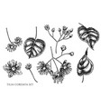 set hand drawn black and white tilia vector image vector image