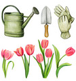 watercolor gardening tools and isolated tulips vector image