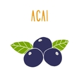 Acai berries vector image