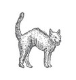 hand drawn halloween scary evil cat vector image vector image