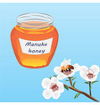manuka honey brunch of manuka blooming and a bee vector image