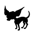 silhouette of a chihuahua vector image vector image
