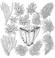 sketch corals set vector image vector image