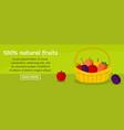 100 percent natural fruits banner horizontal vector image
