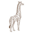 african animal giraffe isolated sketch tallest vector image vector image
