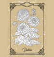 black and white drawing dahlia vector image vector image