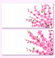 sakura - two cards decorative flowers of cherry vector image vector image