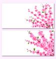 sakura - two cards decorative flowers of cherry vector image