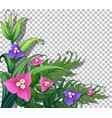 tropical flowers with leaves on transparent vector image