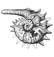 Ammonite fossil vintage engraving vector image vector image
