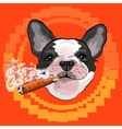 Cute dog head with a Cuban cigar vector image