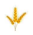 Three stalks of ripe barley icon vector image vector image