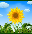 an awasome view with the big sunflower vector image vector image