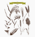 hand drawn agricultural plants sketches vector image vector image