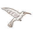 hummingbird or colibri isolated sketch wild vector image
