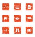 predator icons set grunge style vector image vector image