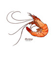 shrimp sketch style vector image vector image