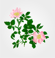 Eglantine twig with leaves and flowers vector image