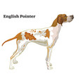 colored decorative standing portrait of dog vector image vector image