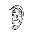 human ear engraving vector image vector image
