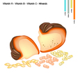 Pumpkin with Vitamin A B C and Minerals vector image vector image