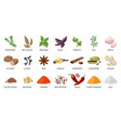 cartoon spices food and dishes seasoning dry vector image
