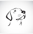dog headlabrador retriever on white vector image vector image