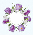 round template with bouquet of crocuses and vector image vector image