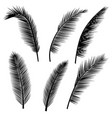 set of palm leaves silhouettes vector image vector image
