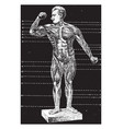 the human body - front view vintage vector image vector image
