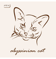 Abyssinian cat vector image vector image