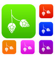 branch of hops set collection vector image vector image