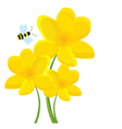 Cartoon Daffodil vector image vector image