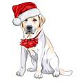 christmas labrador vector image