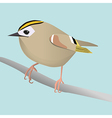 Goldcrest vector image vector image