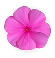 isolated colorful beautiful naturalistic pink vector image