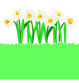 natural background with daffodil flower and copy vector image