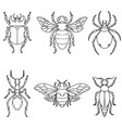 set of beetle isolated on white vector image vector image