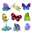 colorful butterfly set beautiful flying insects vector image
