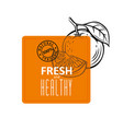 orange fruit emblem in sketch style with text vector image vector image