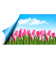 Spring background with pink tulips and a page vector image vector image