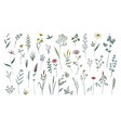 summer flowers hand drawn field blooming herbs vector image