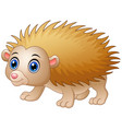 baby hedgehog cartoon isolated white background vector image