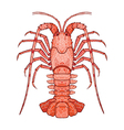 decorative isolated crayfish vector image vector image