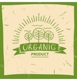 organic product Hand drawn three fruit vector image vector image