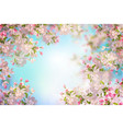 spring cherry blossom vector image vector image
