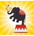 elephant balance festival funfair vector image vector image