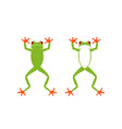 red eye frog vector image vector image
