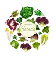 Salads poster of green leafy vegetables vector image vector image